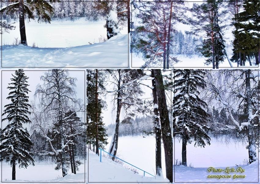 zima v lesy